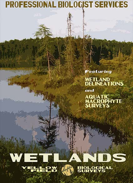 Wetlands Surveys
